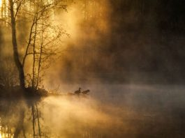 morning_mist
