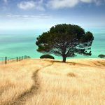 Skrivanje grijeha pokajniku, priroda