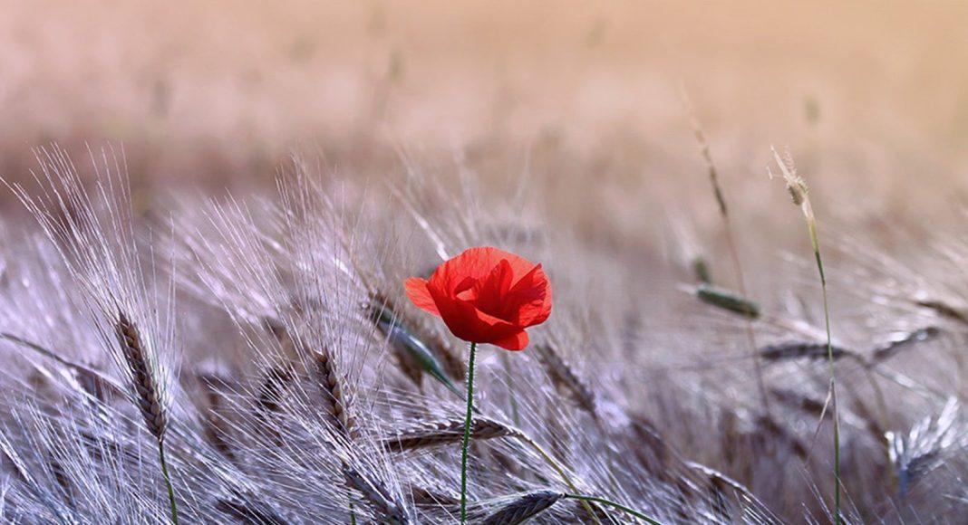 Cvijet propisi muslimanka